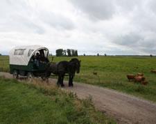 De Hitsaert, aktiviteiten met trekpaarden
